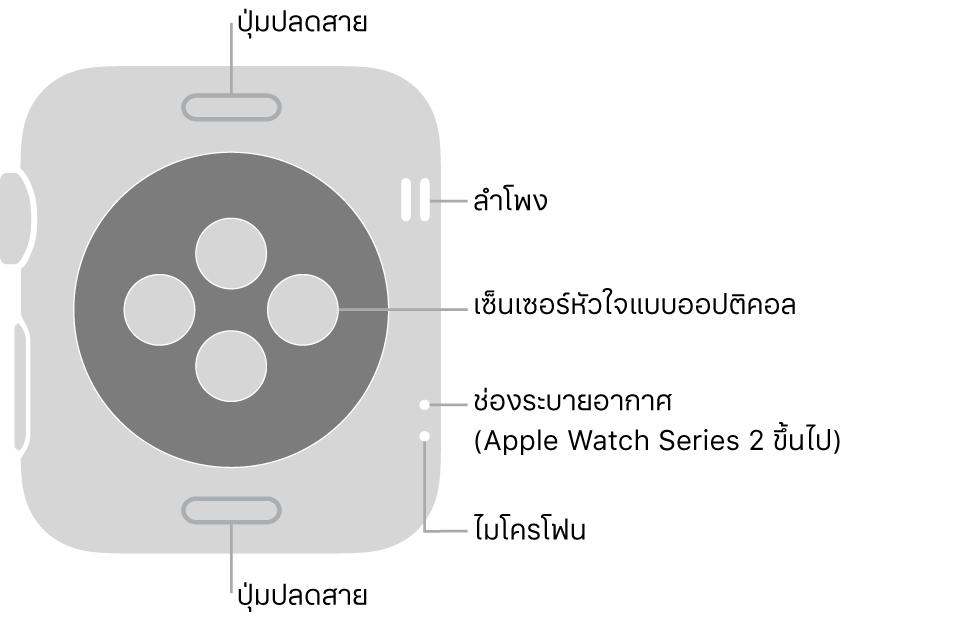 ด้านหลังของ Apple Watch Series 3 และรุ่นก่อนหน้า พร้อมคำอธิบายที่ชี้ไปที่ปุ่มปลดสาย ลำโพง เซ็นเซอร์วัดอัตราการเต้นของหัวใจแบบออปติคอล ช่องระบายอากาศ และไมโครโฟน