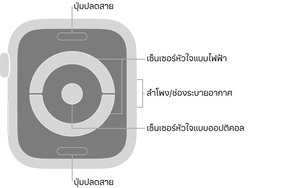 ด้านหลังของ AppleWatch Series 4 พร้อมคำอธิบายภาพที่ชี้ไปที่ปุ่มปลดสาย เซ็นเซอร์วัดอัตราการเต้นของหัวใจแบบไฟฟ้า ลำโพง/ช่องระบายอากาศ และเซ็นเซอร์วัดอัตราการเต้นของหัวใจแบบออปติคอล