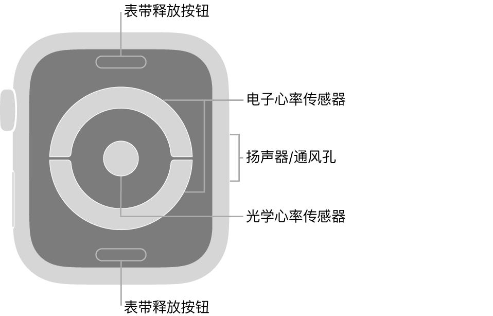 AppleWatch Series 4 的背面,标注指示了表带释放按钮、电子心率传感器、扬声器/通风孔和光学心率传感器。