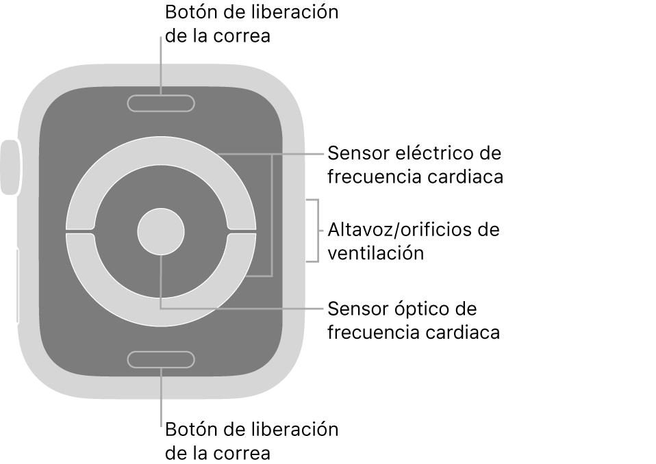 Parte trasera del AppleWatch Series4, con textos que indican el botón de liberación de la correa, el sensor eléctrico de frecuencia cardiaca, los orificios de ventilación/altavoz y el sensor óptico de frecuencia cardiaca.