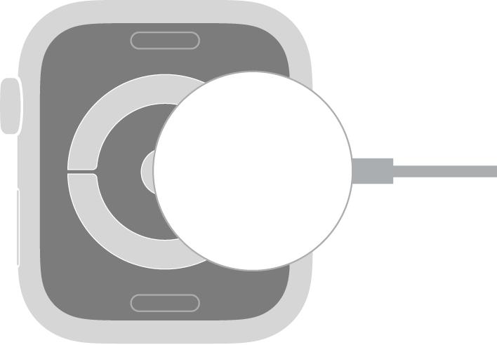 Вогнутый край кабеля с магнитным креплением для зарядки AppleWatch прикрепляется к задней поверхности AppleWatch с помощью магнитов.