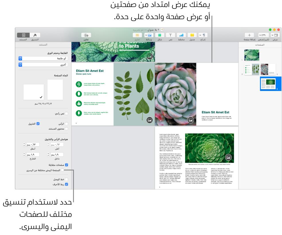 """نافذة Pages وتظهر بها الصور المصغرة للصفحة وصفحات المستند معروضة كمجموعة امتداد من صفحتين. في الشريط الجانبي """"المستند"""" على الجانب الأيسر، خانة الاختيار """"الصفحة اليمنى مختلفة عن اليسرى"""" غير محددة."""