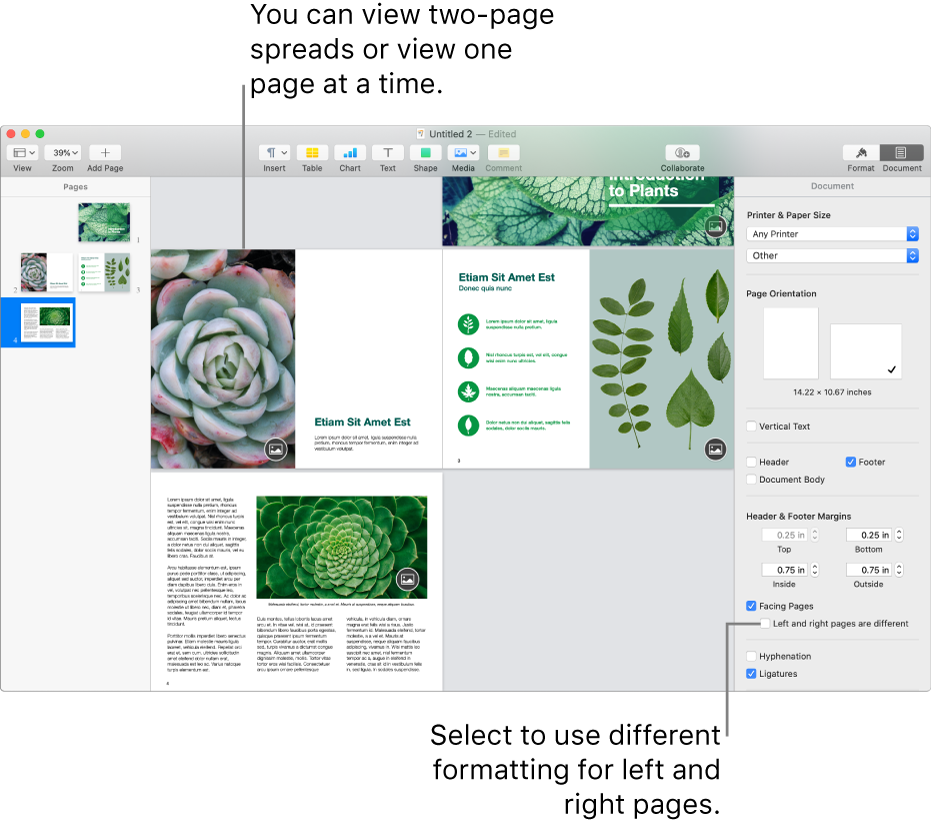 """The Pages window with page thumbnails and document pages viewed as two-page spreads. In the Document sidebar on the right, the """"Left and right pages are different"""" checkbox is unselected."""