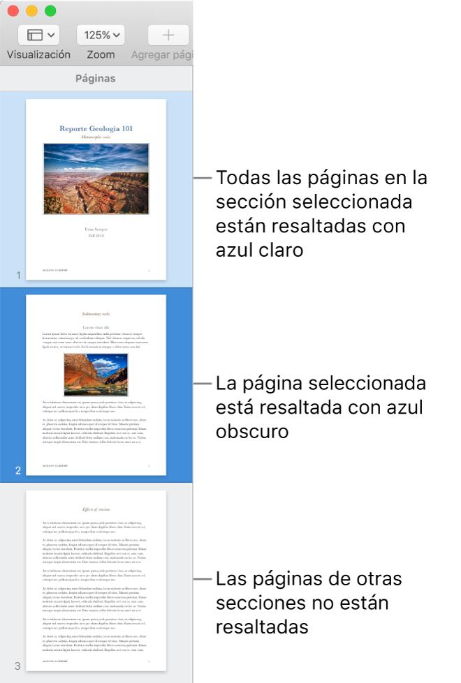 Barra lateral Visualización de miniaturas de página con la página seleccionada resaltada en azul oscuro, y todas las páginas de la sección seleccionada resaltadas en azul claro.
