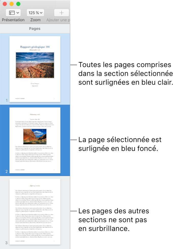 La Présentation des pages sous forme de vignettes dans la barre latérale avec la page sélectionnée surlignée en bleu foncé et l'ensemble des pages de la section sélectionnée surligné en bleu clair.