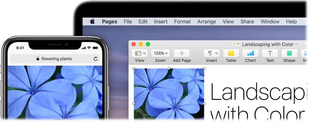 An iPhone showing a photo, next to a Mac showing the photo being pasted into a Pages document.