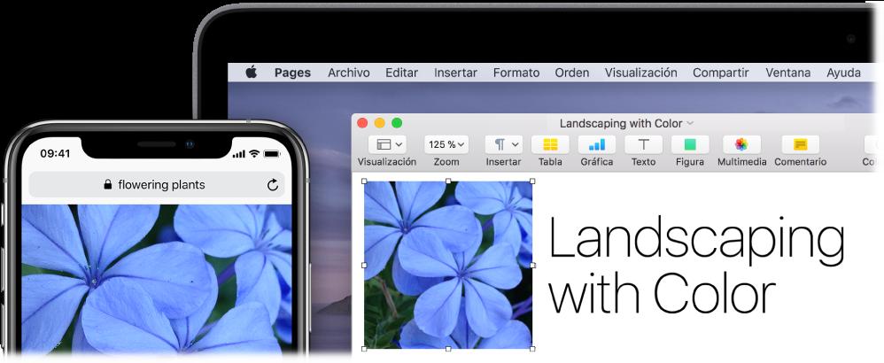 Un iPhone mostrando una foto, junto a una Mac que muestra cómo la foto se pasa a un documento de Pages.