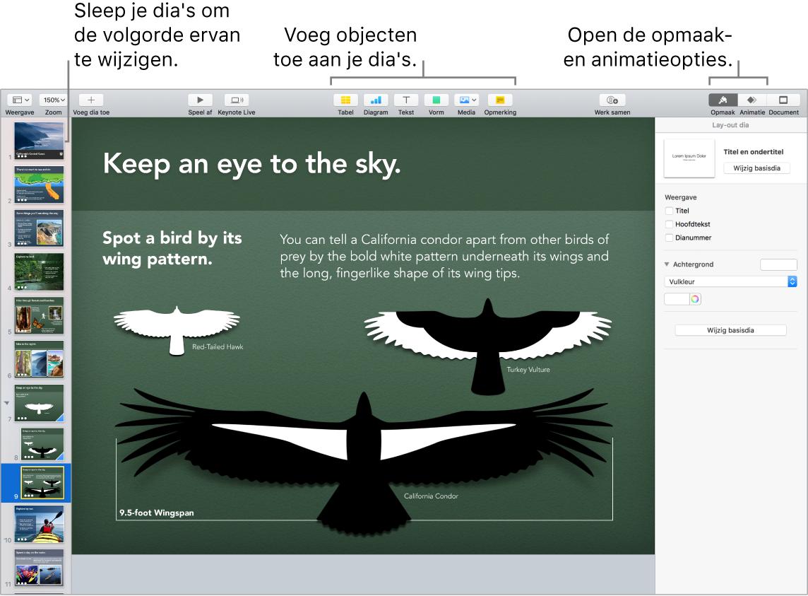 Een Keynote-venster waarin wordt aangegeven hoe je de volgorde van dia's wijzigt. Ook worden de knoppen aangeduid waarmee je objecten aan dia's kunt toevoegen en opmaak- en animatieopties kunt weergeven.