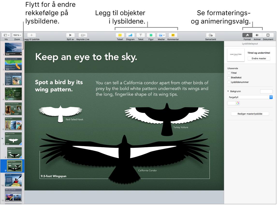 Et Keynote-vindu som viser hvordan man omorganiserer lysbilder, og som identifiserer knapper som lar deg legge til objekter på lysbilder, inkludert alternativer for format og animering.