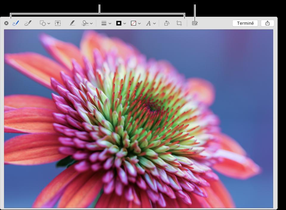 Une image dans la fenêtre d'annotation affichant la barre d'outils d'annotation et l'outil sur lequel cliquer pour utiliser Annotation Continuité sur un iPhone ou iPad se trouvant à proximité.