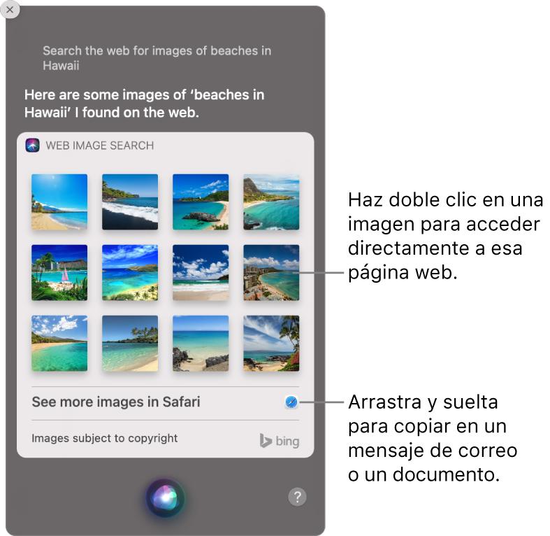 """La ventana de Siri, con los resultados de Siri a la petición """"Busca en la web imágenes de playas de Hawái"""". Puedes hacer doble clic en una imagen para abrir la página web que contiene la imagen o arrastrar una imagen a un correo electrónico o documento o al escritorio."""