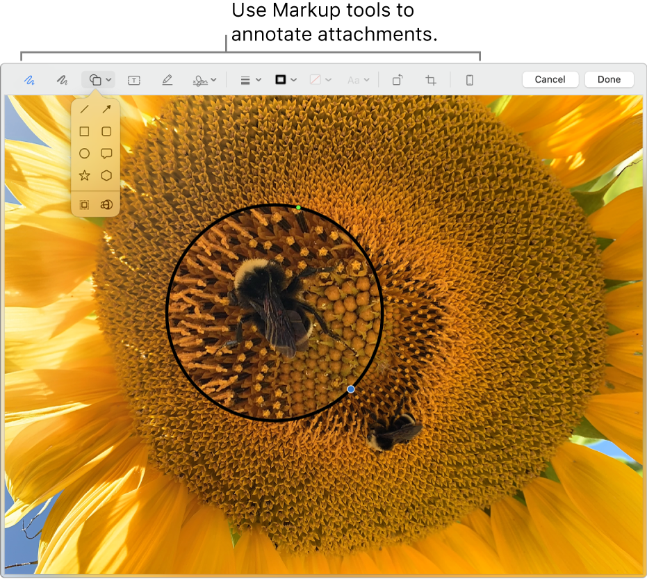 An attachment with the Markup toolbar across the top.