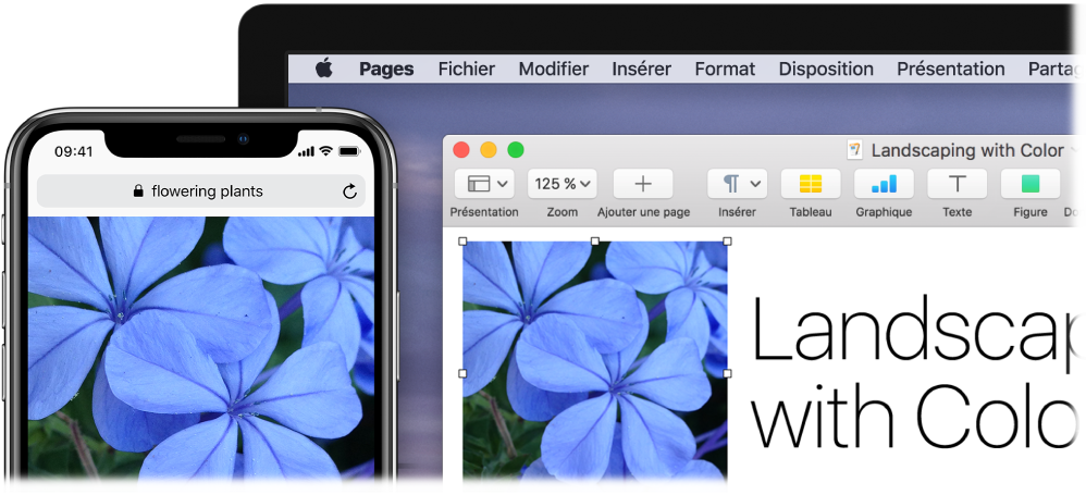 Un iPhone affichant une photo, à côté d'un Mac montrant la photo en train d'être collée dans un document Pages.