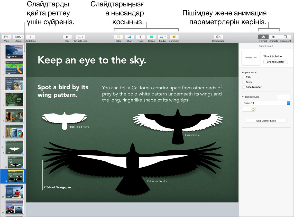 Слайдтарды қайта реттеу жолын және нысандарды слайдтарға қосуға мүмкіндік беретін түймелерді, соның ішінде пішім мен анимация параметрлерін көрсетіп тұрған Keynote терезесі.