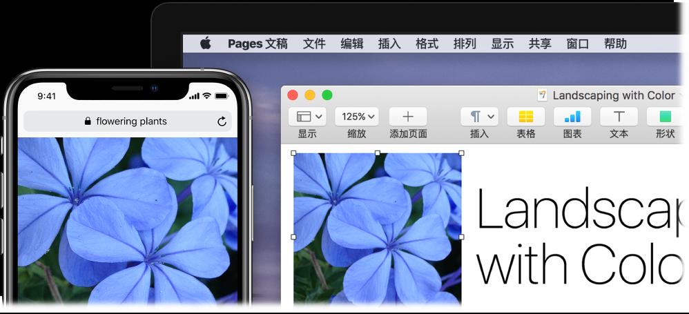 iPhone 显示一张照片,旁边的 Mac 上显示该照片被粘贴到 Pages 文稿中。