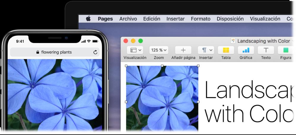 Un iPhone en el que se muestra una foto junto a un Mac en el que se muestra que la foto se está pegando en un documento de Pages.
