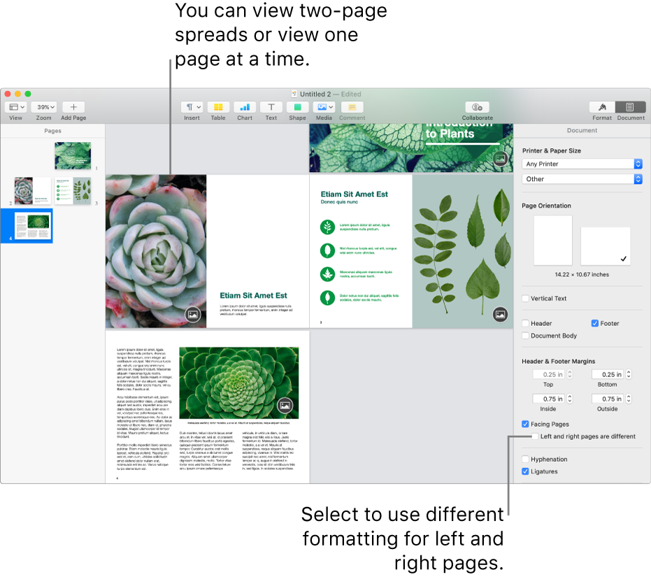 """The Pages window with page thumbnails and document pages viewed as two-page spreads. In the Document sidebar on the right, the """"Left and right pages are different"""" tickbox is unselected."""