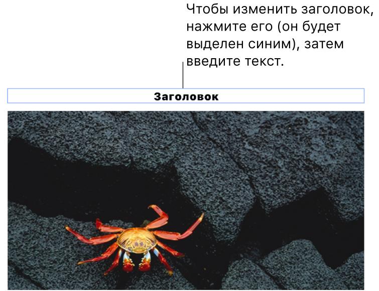 Под фотографией отображается заполнитель «Заголовок»; синяя рамка вокруг поля заголовка показывает, что оно выбрано.