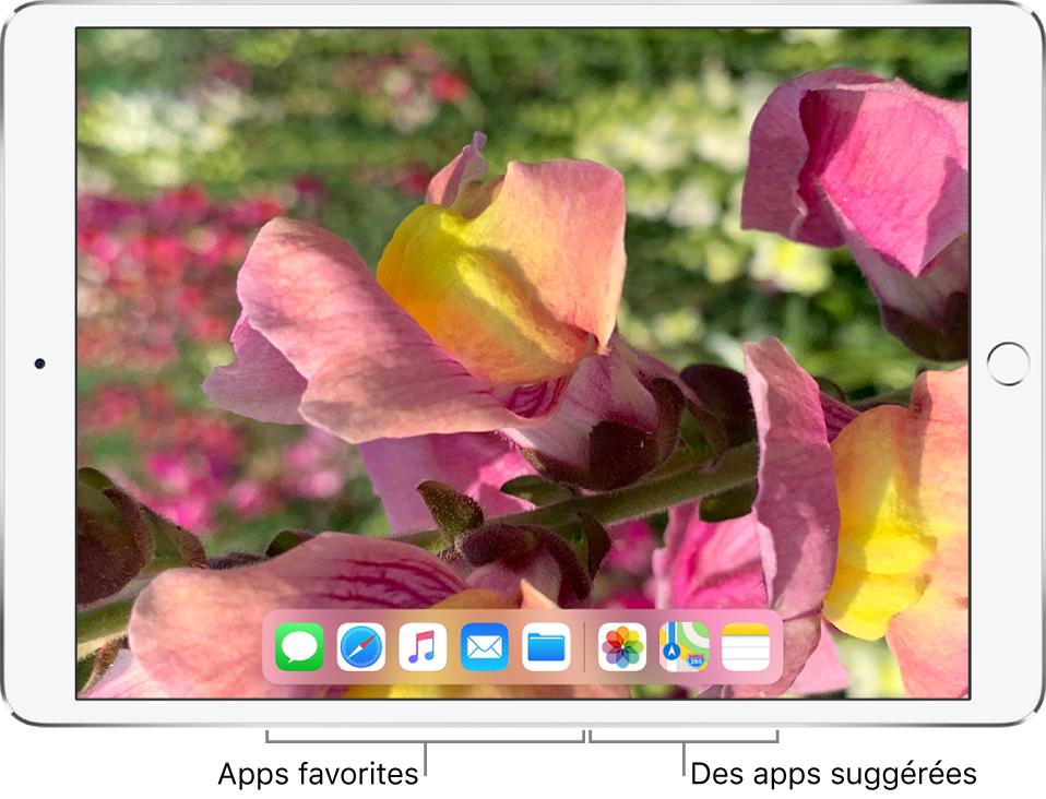Le Dock affichant cinq apps favorites à gauche et trois apps suggérées à droite.