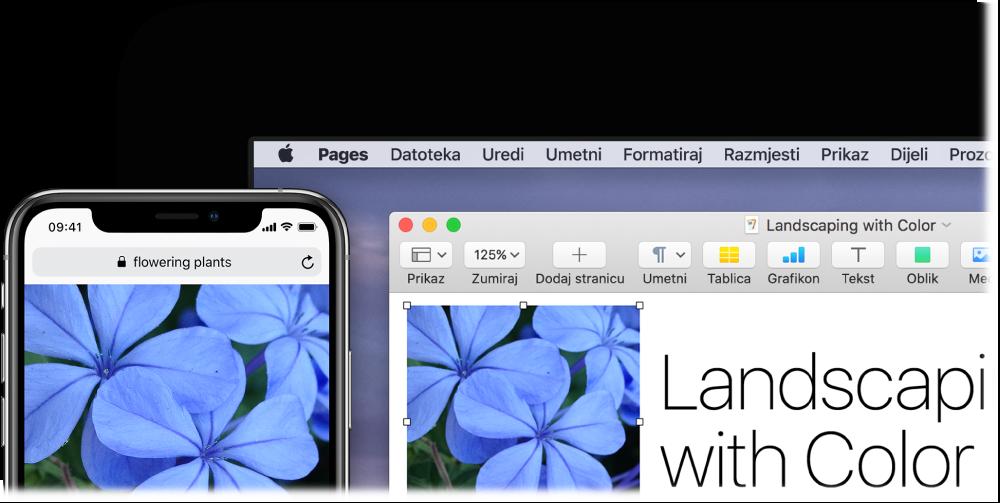 iPhone prikazuje fotografiju, pored Maca koji pokazuje tu sliku zalijepljenu u dokument aplikacije Pages.
