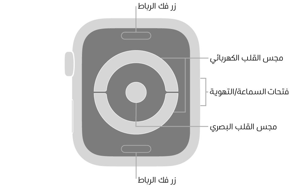 الجزء الخلفي من AppleWatchSeries4 وAppleWatchSeries5 ويظهر به زرا تحرير الرباط في الأعلى والأسفل ومجس القلب الكهربائي ومجس القلب الكهربائي في المنتصف وفتحات السماعة/التهوية على جانب السماعة.