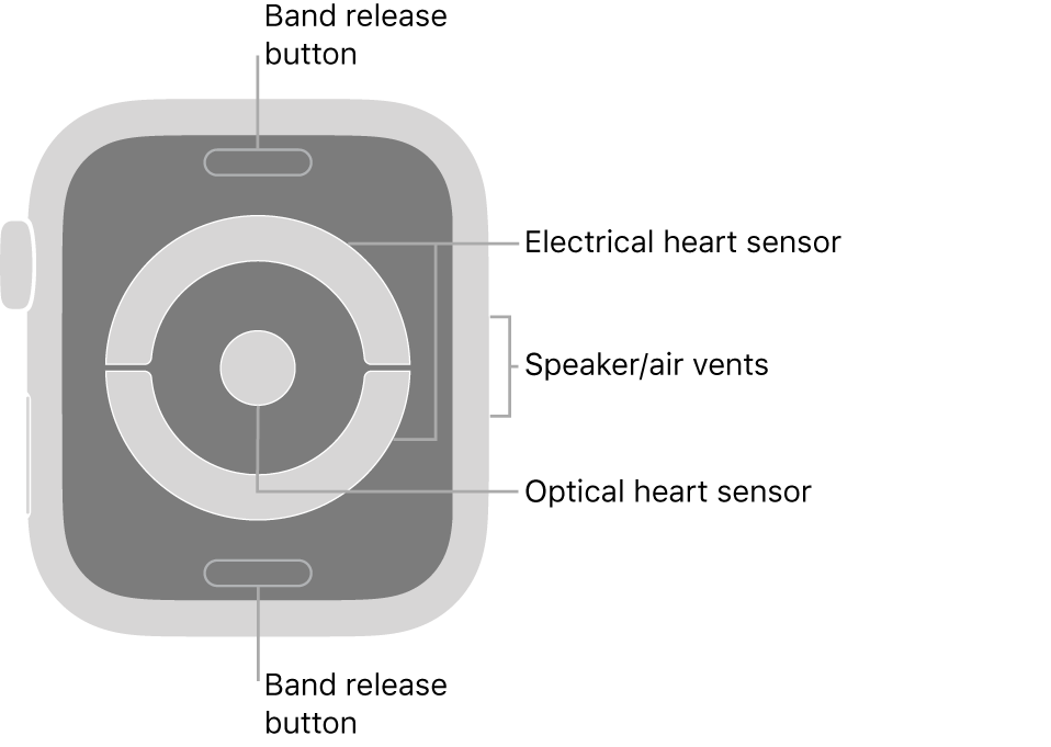 The back of Apple Watch Series 4 and Apple Watch Series 5, with the band release buttons at top and bottom, the electrical heart sensors and optical heart sensor in the middle, and the speaker/air vents on the side of the watch.