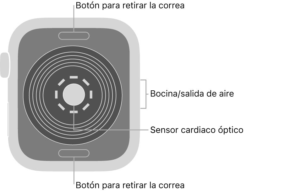 En el reverso del Apple WatchSE se muestran los botones de liberación de correa en la parte superior e inferior; el sensor óptico para medir la frecuencia cardíaca en el centro; y la bocina/ranuras de aire en un lado.