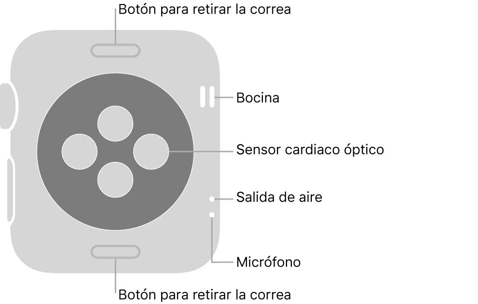 En el reverso del AppleWatch Series3 se muestran los botones de liberación de correa en la parte superior e inferior; los sensores ópticos para medir la frecuencia cardíaca en el centro; y, en orden descendente, la bocina, la ranura de aire y el micrófono en un lado del reloj.
