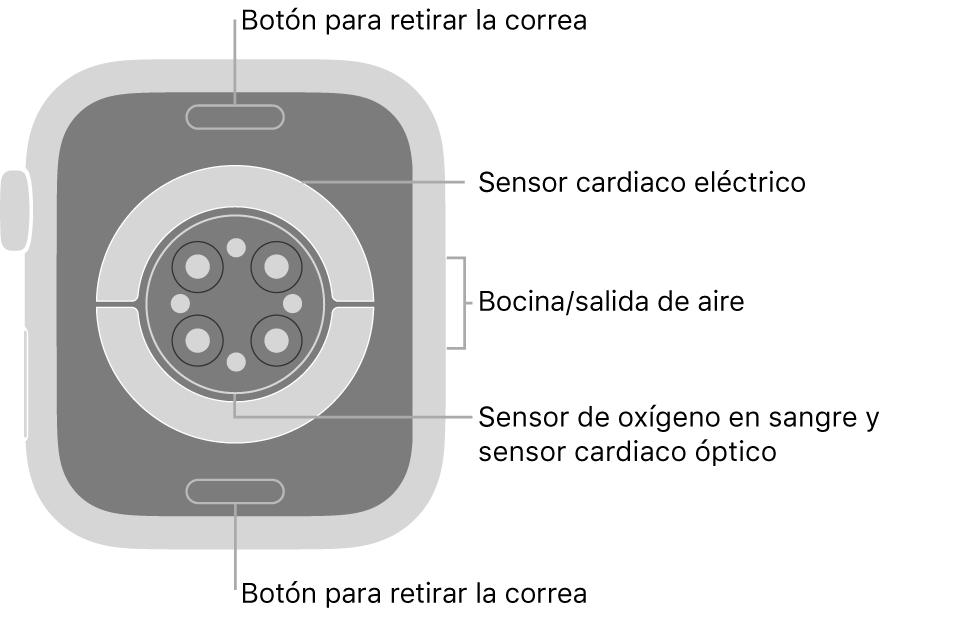 En el reverso del AppleWatch Series6 se muestran los botones de liberación de correa en la parte superior e inferior; los sensores eléctricos y ópticos para medir la frecuencia cardíaca y los sensores para medir los niveles de oxígeno en la sangre en el centro; y la bocina/ranuras de aire en un lado.
