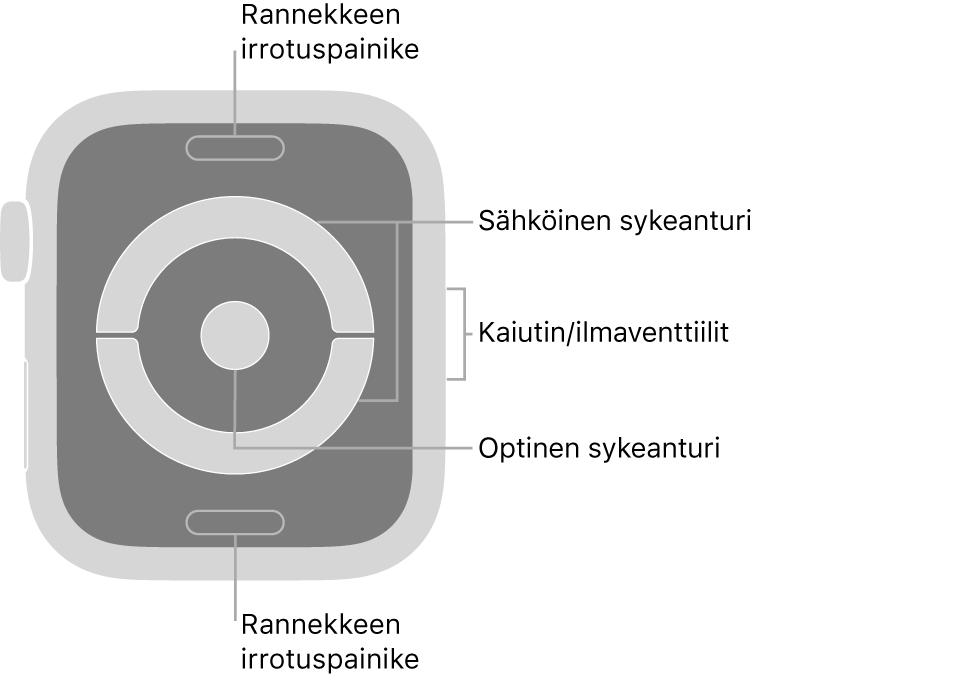 AppleWatch Series4:n ja AppleWatch Series5:n takaosa, jossa on rannekkeen irrotuspainikkeet ylhäällä ja alhaalla, sähköiset sykeanturit ja optinen sykeanturi keskellä sekä kaiutin/ilmastointiaukot kellon sivussa.