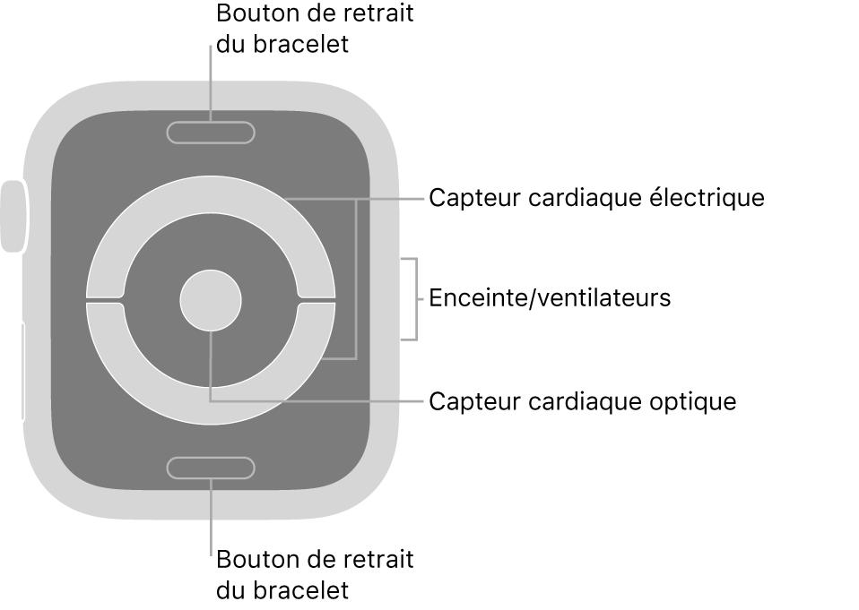 L'arrière de l'AppleWatch Series4 et de l'AppleWatch Series5, avec les boutons de retrait du bracelet en haut et en bas, les capteurs électriques de fréquence cardiaque et le capteur optique de fréquence cardiaque au milieu ainsi que le haut-parleur et les aérations sur le côté des montres.