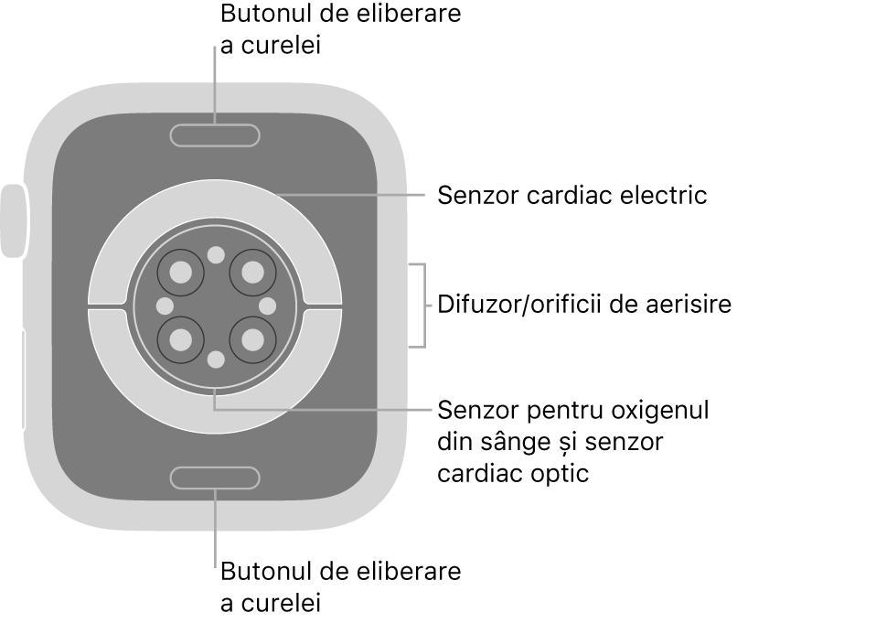 Spatele dispozitivului AppleWatch Series6, cu butoanele de eliberare a brățării în partea de sus și de jos, senzorii cardiaci electrici, senzorii cardiaci optici și senzorii pentru oxigenul din sânge în mijloc și difuzorul/orificiile de ventilare pe partea laterală.