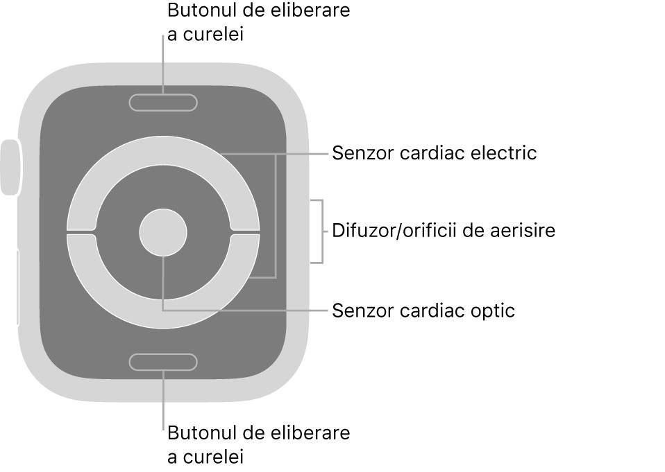 Spatele modelelor AppleWatch Series4 și AppleWatch Series5, cu butoanele de eliberare a brățării în partea de sus și de jos, senzorii cardiaci electrici și senzorul cardiac optic în mijloc și difuzorul/orificiile de ventilare pe partea laterală a Watch‑ului.