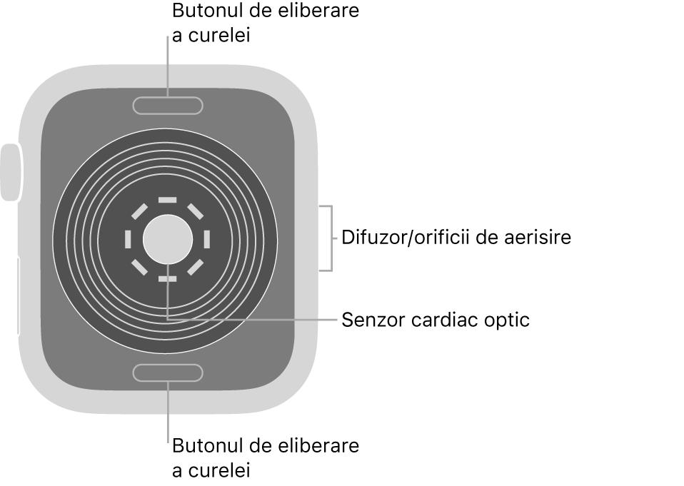 Spatele dispozitivului AppleWatchSE, cu butoanele de eliberare a brățării în partea de sus și de jos, senzorul cardiac optic în mijloc și difuzorul/orificiile de ventilare pe partea laterală.