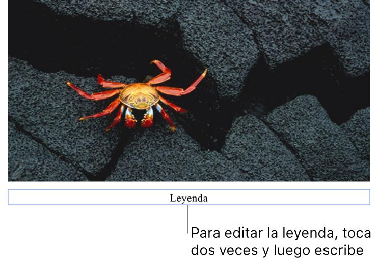 """La leyenda del marcador de posición (""""Leyenda"""") aparece debajo de una foto; un contorno azul alrededor del campo de leyenda indica que está seleccionado."""