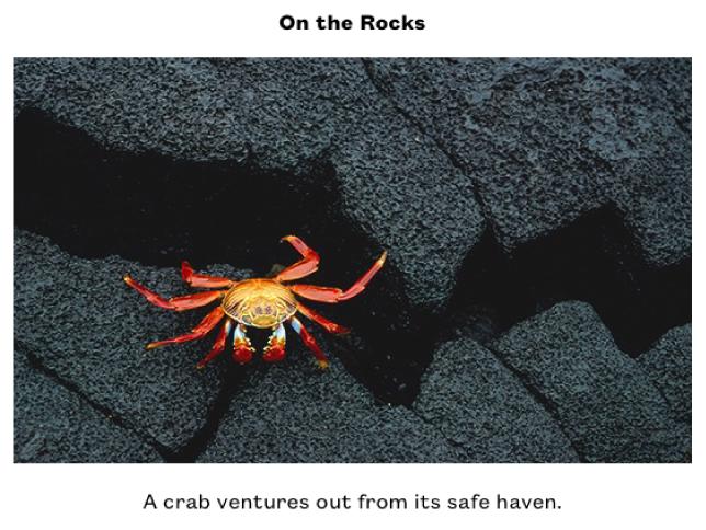 Een foto van een rood met geel krabbetje op zwarte rotsen. Boven de afbeelding staat de titel 'On the Rocks' en onder de foto staat het bijschrift 'Een krab kruipt uit zijn veilige haven'.