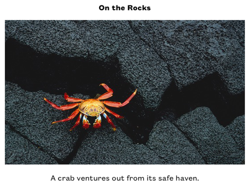 """A photo of a small yellow and red crab on some black rocks. Above the photo is the title, """"On the Rocks,"""" and below the photo is the caption """"A crab ventures out from its safe haven."""""""
