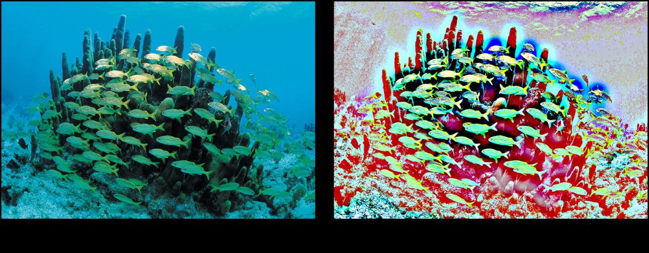 """Canvas mit dem Effekt des Filters """"Hochpass"""""""