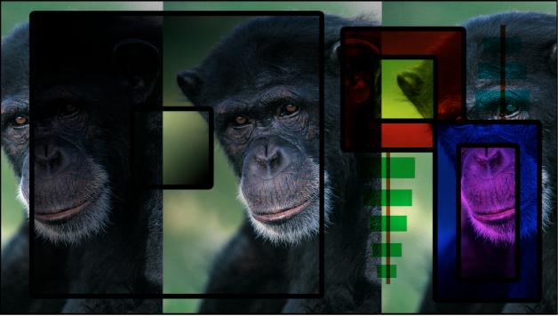 """Canvas mit Kombination aus Farbfeldern und dem Affen unter Verwendung der Füllmethode """"Multiplizieren"""""""