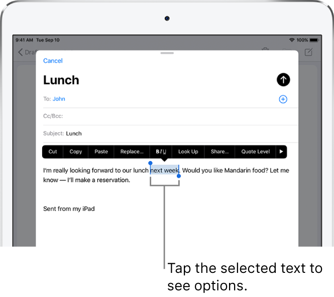 A sample email message with some of the text selected. Above the selection are the Cut, Copy, Paste, and Replace buttons. The selected text is highlighted.