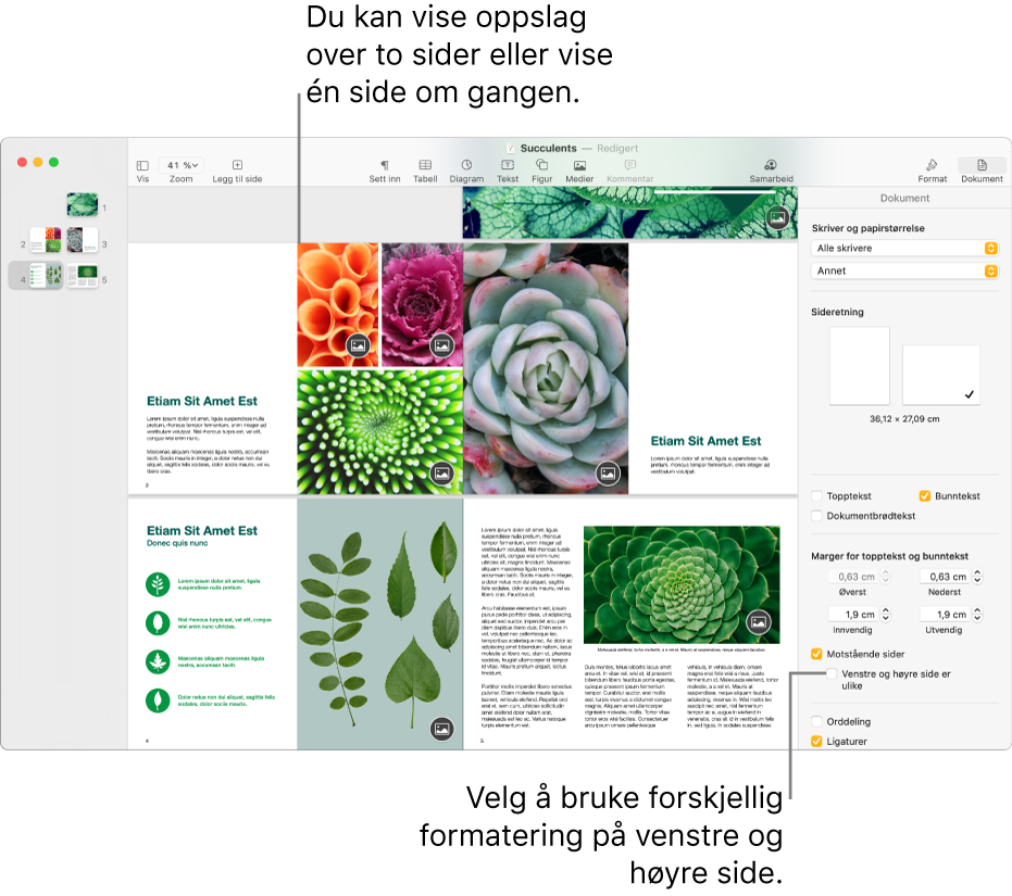 Pages-vinduet med sideminiatyrer og dokumentsider vist som tosidersoppslag. I Dokument-sidepanelet til høyre er ikke avkrysningsruten «Venstre og høyre side er ulike» markert.