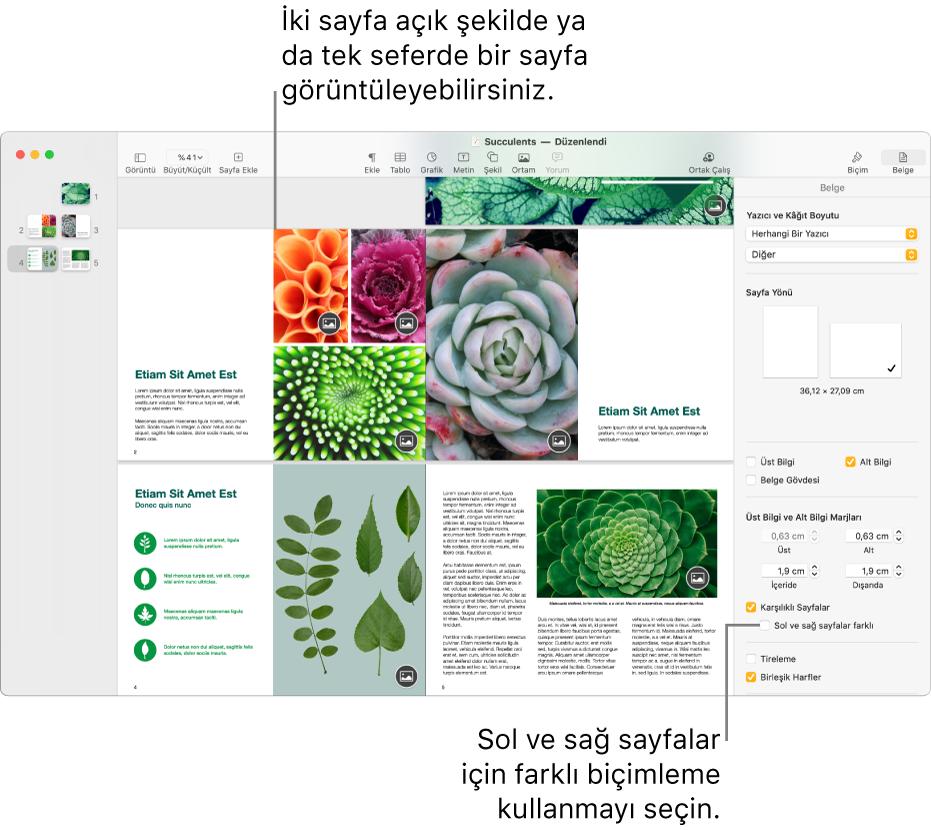 """Sayfa küçük resimleri ve birbirine bakan iki sayfa olarak görüntülenen belge sayfaları ile Pages penceresi. Sağdaki Belge kenar çubuğunda, """"Sol ve sağ sayfalar farklı"""" onay kutusunun seçimi kaldırılmıştır."""