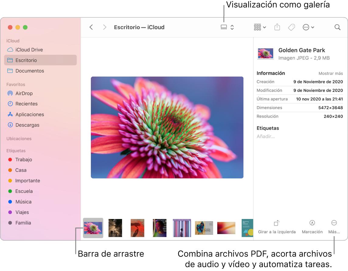 Una ventana del Finder abierta en modo de visualización con una foto grande y una fila de fotos más pequeñas —la barra de arrastre— debajo. A la derecha de la barra de arrastre hay controles para rotar, marcar y otras acciones.
