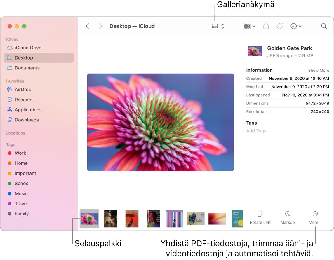 Avoin Finder-ikkuna gallerianäkymässä, jossa on suuri valokuva ja sen alla rivi pienempiä kuvia (eli selainpalkki). Selauspalkin oikealla puolella näkyvät säätimet muun muassa pyörittämiselle ja merkinnöille.
