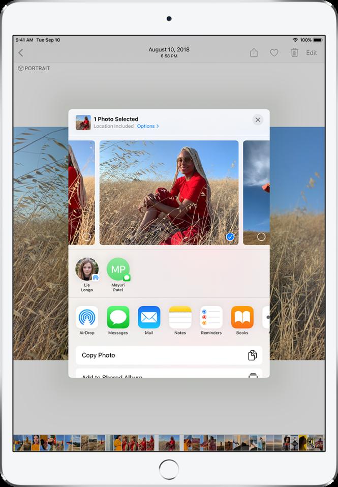 Fotoattēlu koplietošanas logs atrodas ekrāna centrā. Fotoattēli ir izvietoti loga augšpusē; viens fotoattēls ir atlasīts, uz to norāda kontrolzīme. Rindā zem fotoattēliem ir ieteikti nesenie kontakti, ar ko koplietot attēlus. Zem ieteiktajiem kontaktiem ir koplietošanas opcijas, no kreisās puses uz labo, AirDrop, Messages, Mail, Notes, Reminders un Books. Koplietošanas ekrāna apakšā ir darbību rinda. No augšas uz leju ir redzamas darbības CopyPhoto un AddtoSharedAlbum.