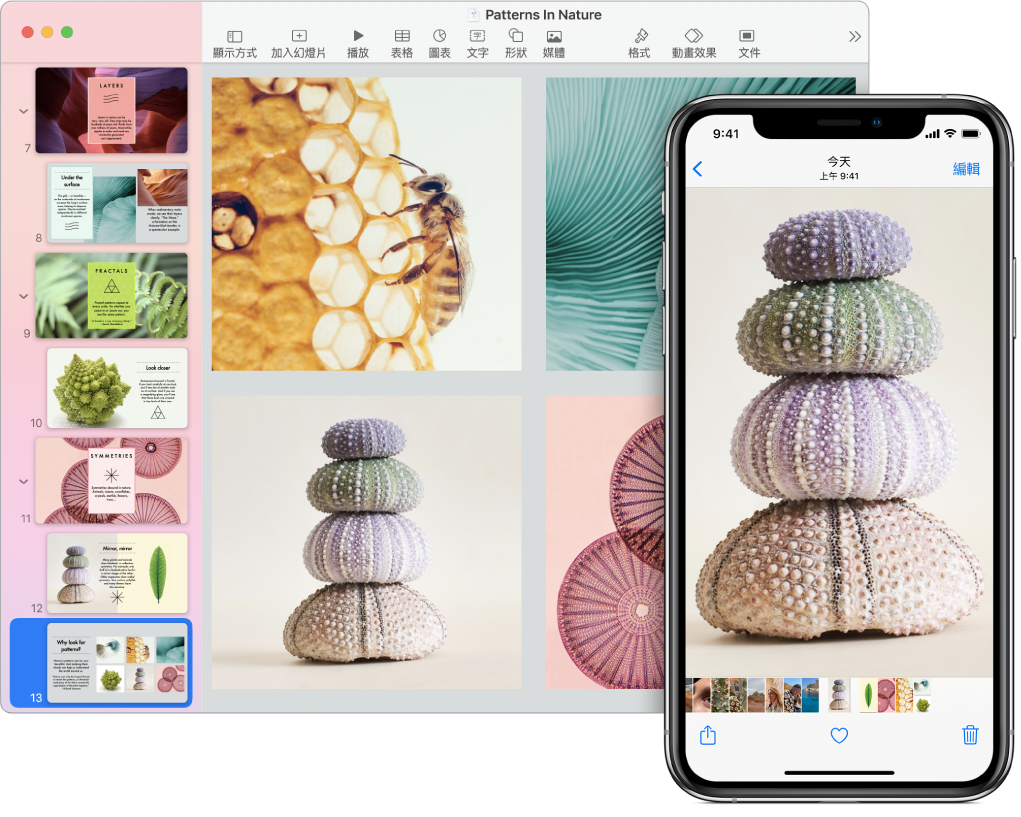 顯示照片的 iPhone,旁邊顯示的是將該照片貼入 Pages 文件後的 Mac。