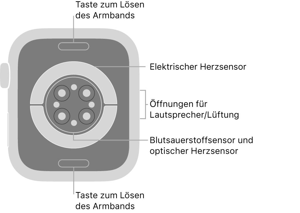 Die Rückseite der AppleWatch Series6 mit Entriegelungstasten oben und unten, elektrischem Herzsensor, optischem Herzsensor und Sensor für den Sauerstoffgehalt im Blut in der Mitte sowie den Lautsprecher-/Lüfteröffnungen an der Seite.