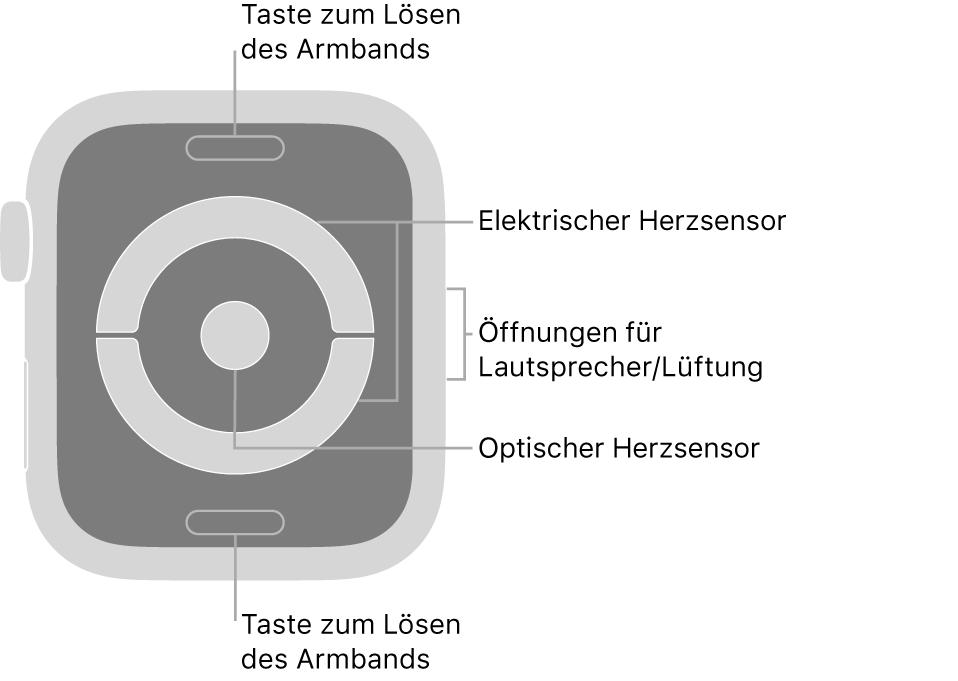 Die Rückseite der AppleWatchSeries4 und Apple Watch Series 5 mit Entriegelungstasten oben und unten, elektrischem und optischem Herzsensor in der Mitte sowie Lautsprecher-/Lüfteröffnungen an der Seite.