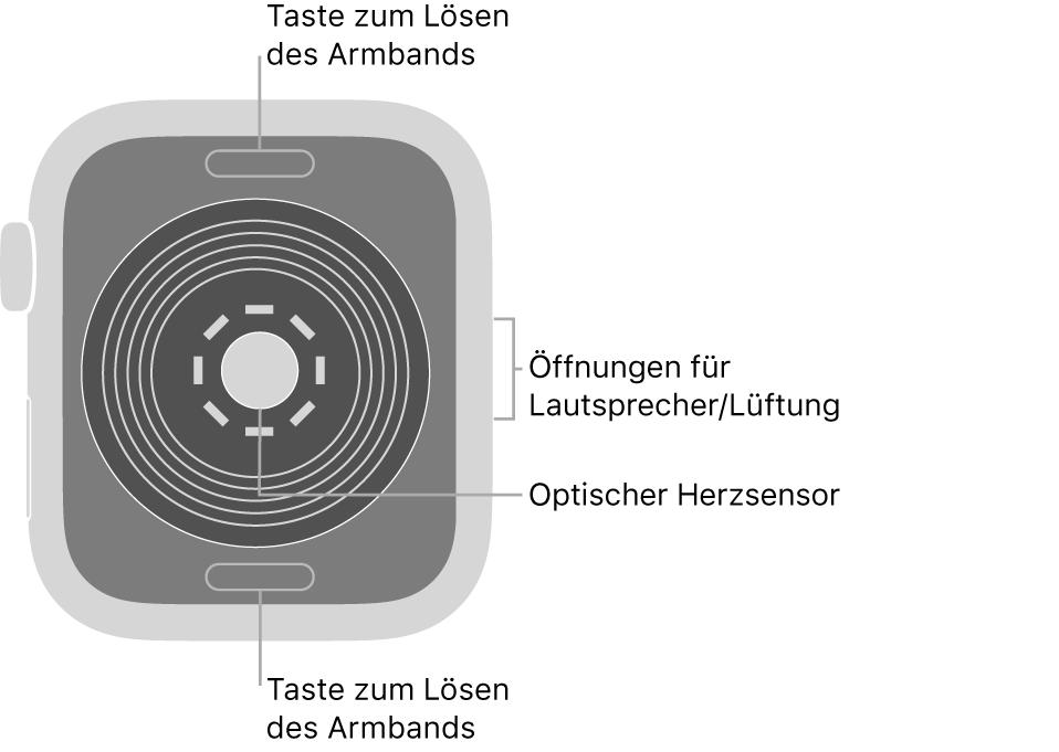 Die Rückseite der AppleWatchSE mit Entriegelungstasten oben und unten, optischem Herzsensor in der Mitte sowie Lautsprecher-/Lüfteröffnungen an der Seite.
