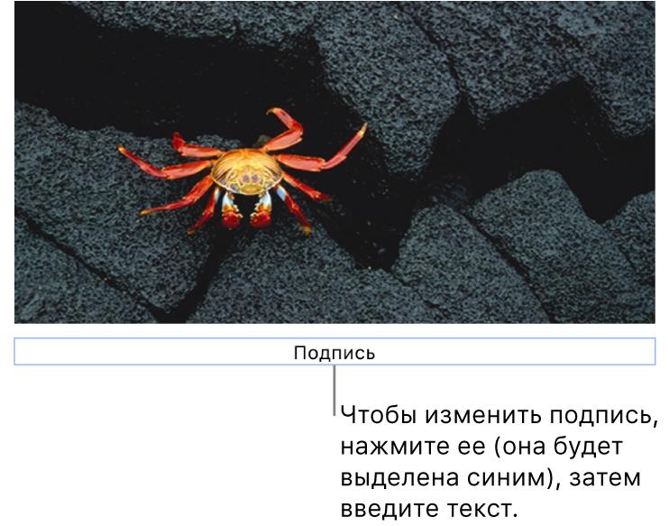 Под фотографией отображается заполнитель «Подпись»; синяя рамка вокруг поля подписи показывает, что оно выбрано.